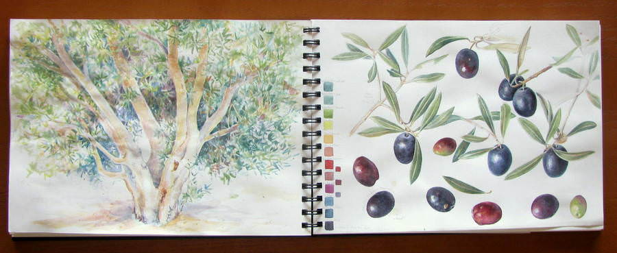 Sketchbook pages of watercolour studies of olives and an olive tree with colour charts by Shevaun Doherty (Doodlewash)