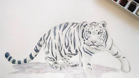White Tiger - Doodlewash by Marian Sofia watercolor sketch of white tiger with Winsor & Newton Cotman watercolor palette