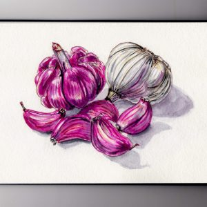 National Garlic Day - Doodlewash and watercolor of red pink and white garlic bulbs