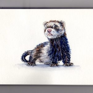 National Ferret Day - Watercolor sketch and painting of ferret illustration