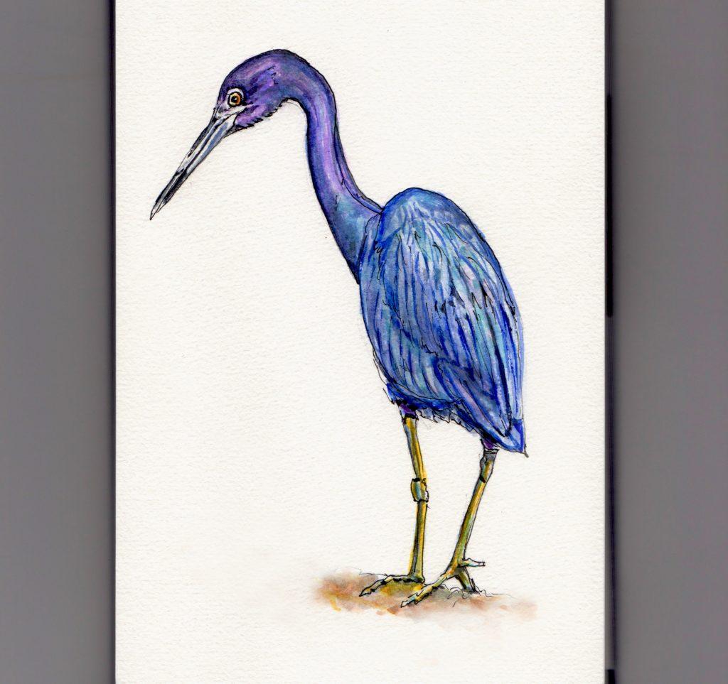 National Audubon Day - doodlewash and watercolor illustration of little blue heron
