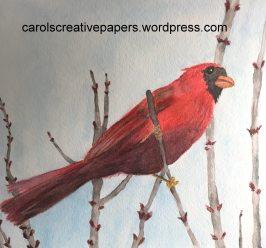 Doodlewash by Carol Hartmann - Red Cardinal on tree branch