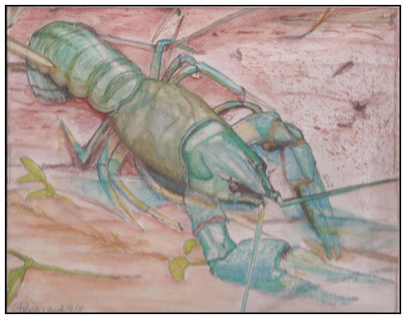 Doodlewash by Schokohund - Mijello watercolor of Lobster