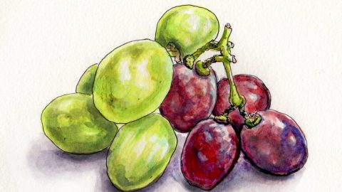 Grapes for National Wine Day Doodlewash and watercolor sketch of green and red grapes