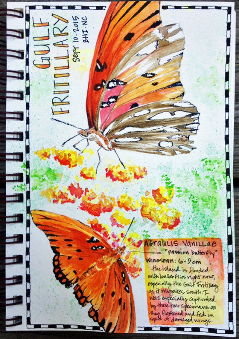 Doodlewash and watercolor sketch by Tonya at Scratchmade Journal of gulf fritillary passion butterfly