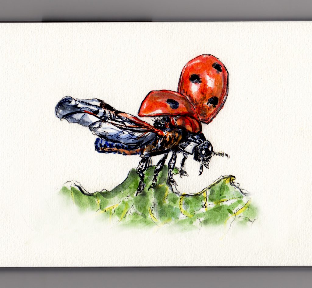 Ladybug wings doodlewash and watercolor sketch of lady bug taking flight