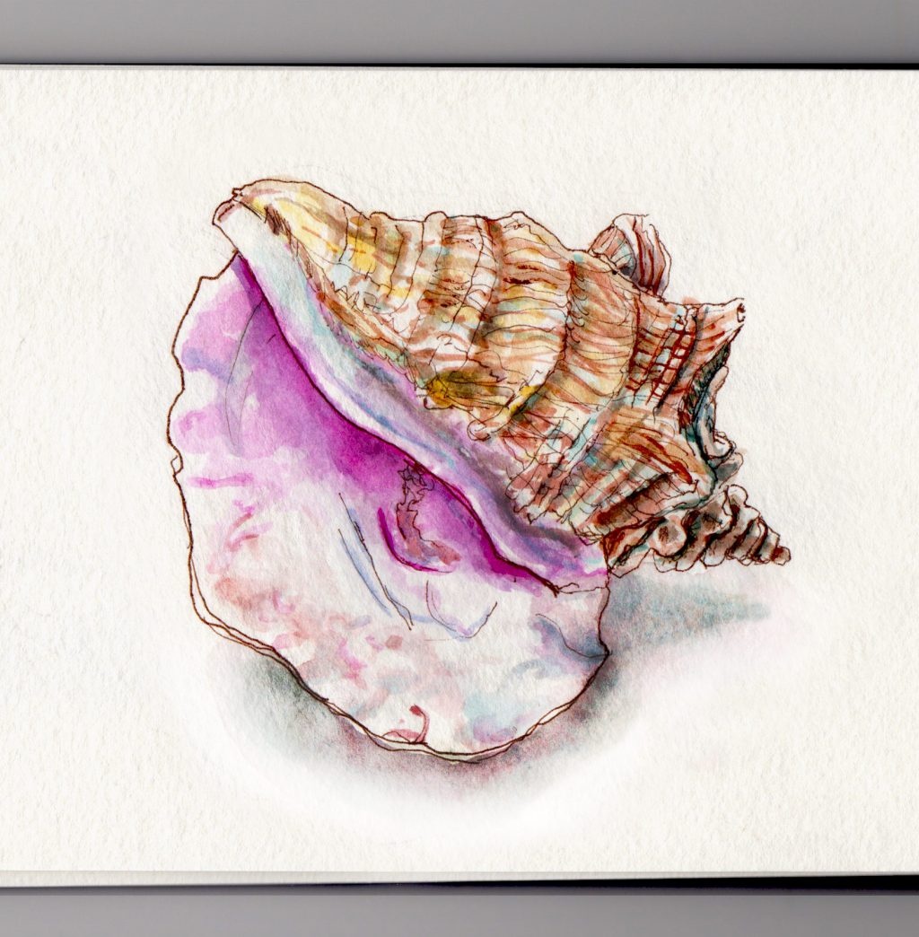 Conch shells and hearing the sound of the ocean Doodlewash and watercolor sketch