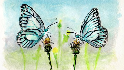 Doodlewash and watercolor sketch of two blue butterflies in a a meadow