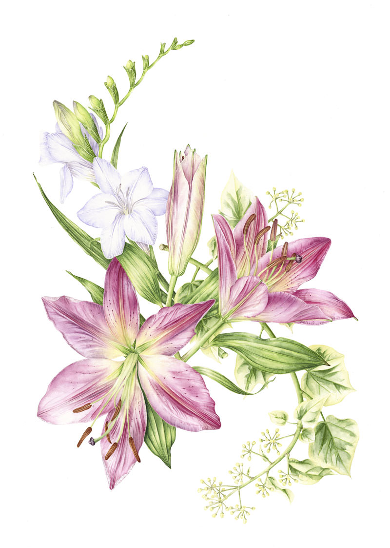 Doodlewash - Watercolor botanical illustration by Jarnie Godwin of hogarth flower arrangement
