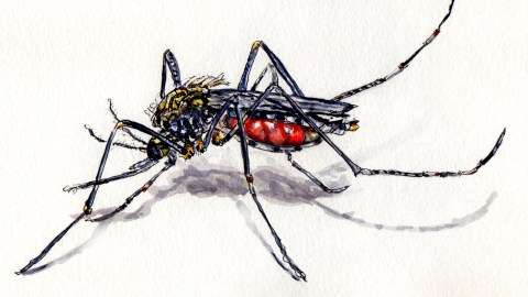 Day 6: #WorldWatercolorMonth Mosquito macro on white background doodlewash and watercolor sketch
