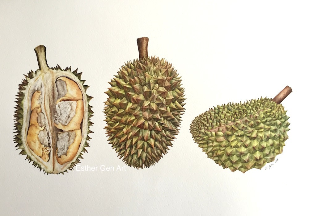 Doodlewash and watercolor painting by Esther Geh of Durians
