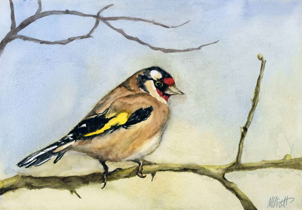 Doodlewash and watercolor sketch by Meliessa Garrison Elliott of Carduelis Bird