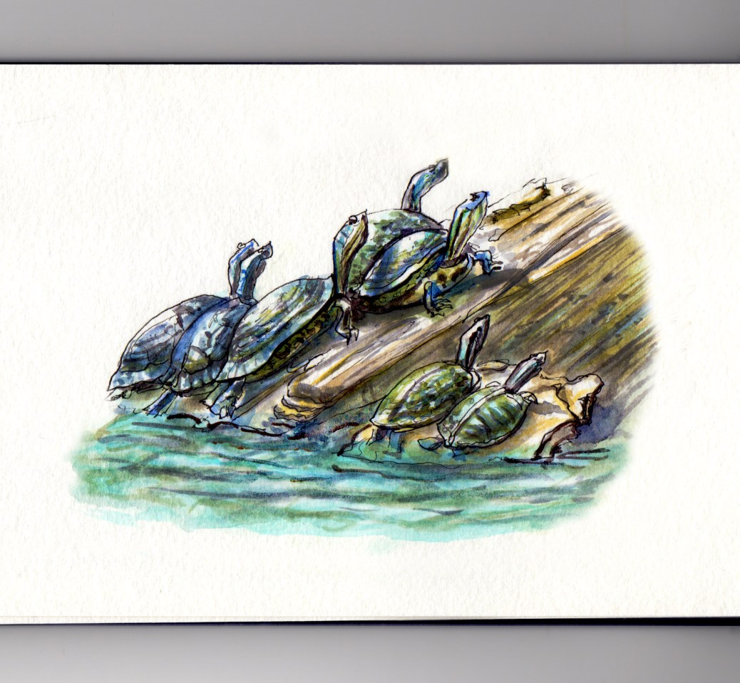 My Favorite Park Loose Park Turtles Sunbathing #WorldWatercolorGroup