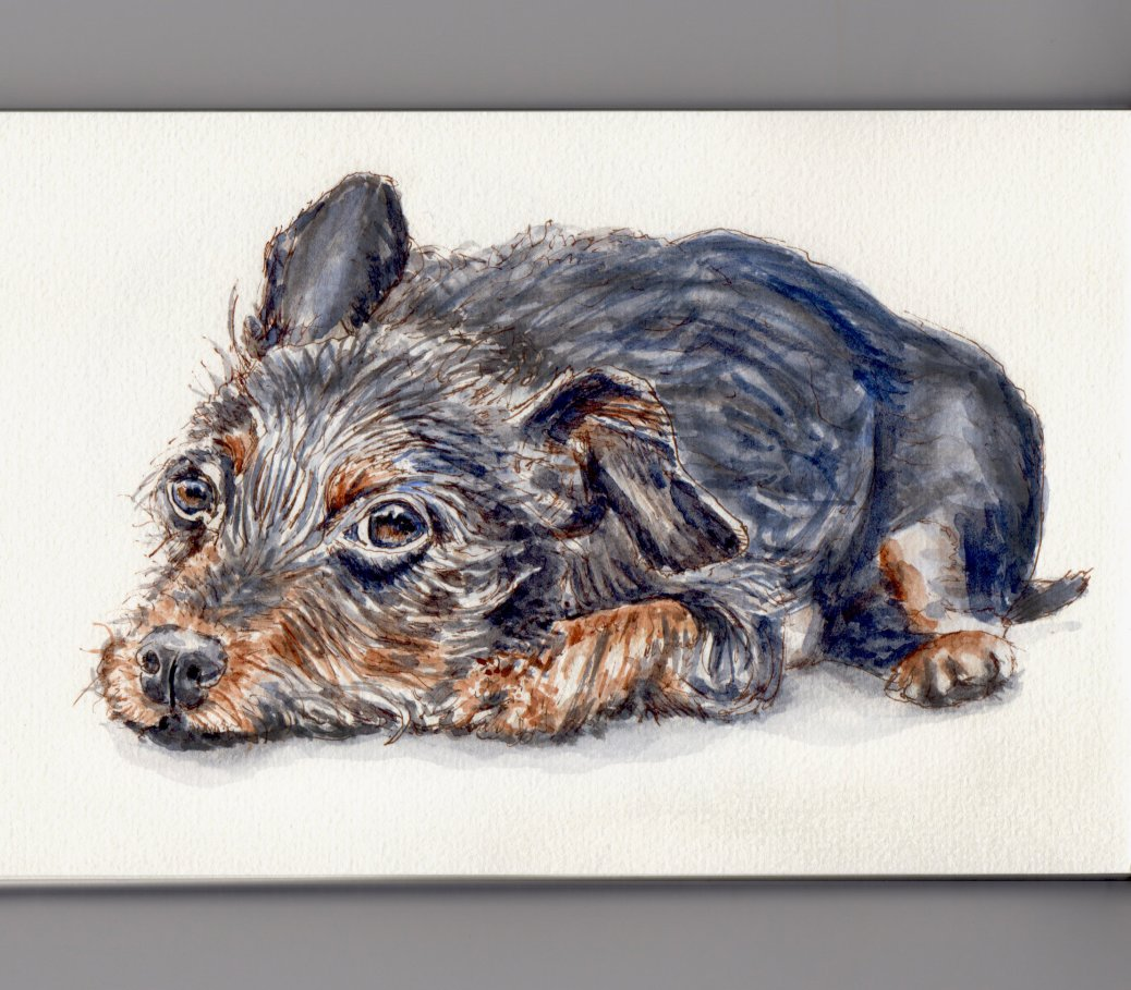 My Favorite Animal: #WorldWatercolorMonth Dog Cute Puppy laying on ground