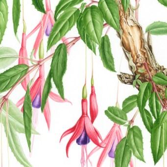 Doodlewash - Botanical Illustration by Işık Güner 2
