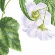 Doodlewash - Botanical Illustration by Işık Güner 3