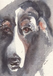 #Doodlewash - Watercolor sketch by Leslie Chua - Bernise Mountain Dog - #WorldWatercolorGroup