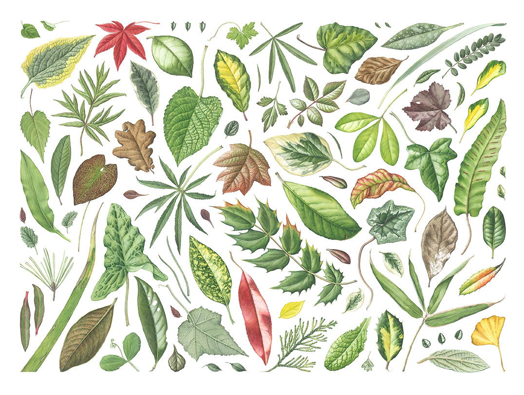 #Doodlewash - Watercolor Illustration by Julia Trickey - leaves from Bath Botanical Gardens - #WorldWatercolorGroup