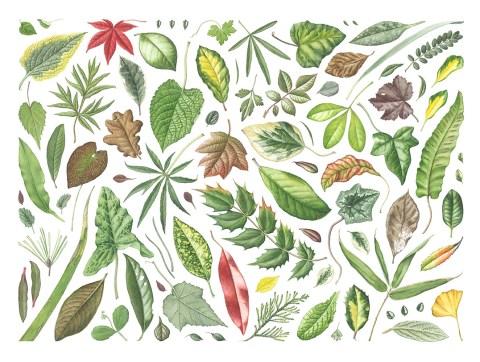 GUEST ARTIST: Painting Plant Portraits