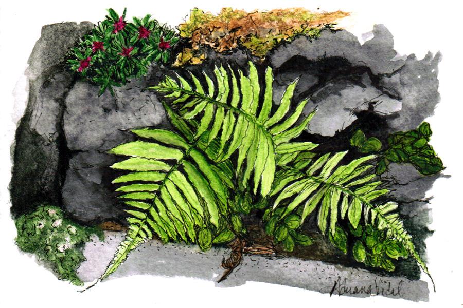 #WorldWatercolorGroup - Watercolor of Ferns from the Ke'anae Arboretum, Maui by Adriana Vidal - #doodlewash