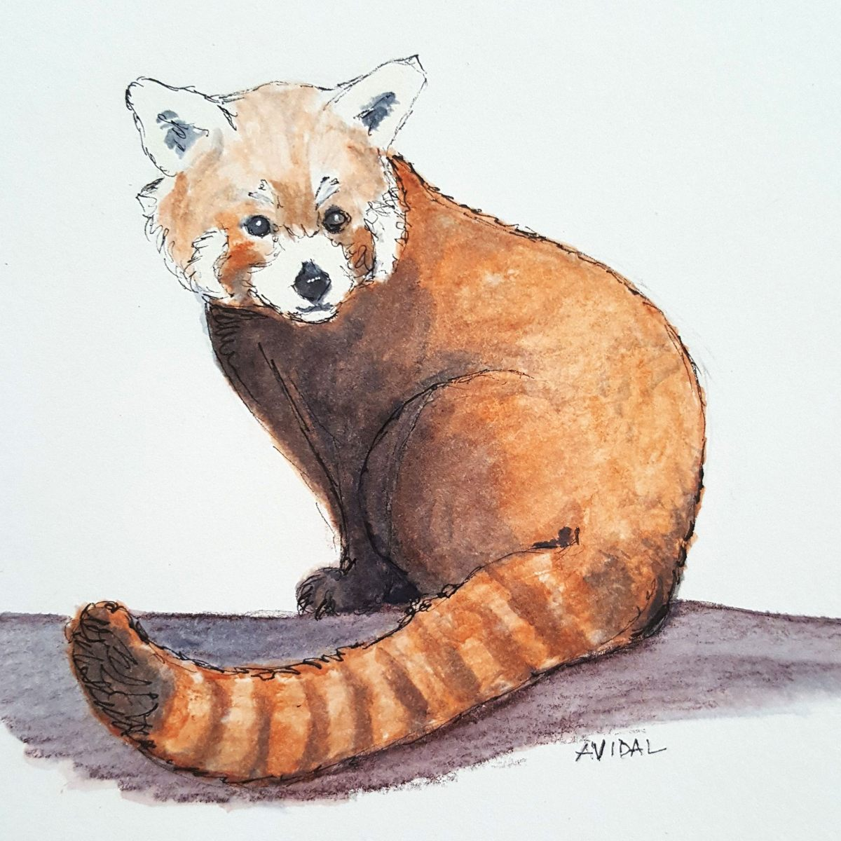 #WorldWatercolorGroup - Watercolor - Red Panda by Adriana Vidal - #doodlewash