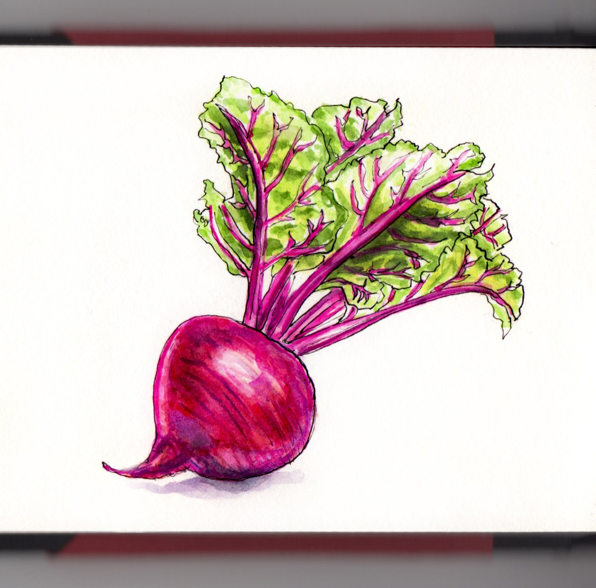 Day 17 - #WorldWatercolorGroup Red Beet watercolor on white background #doodlewash