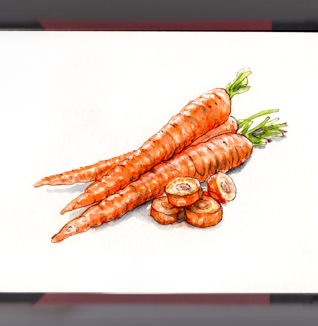 Day 9 - #WorldWatercolorGroup Looking for Carrots orange white background watercolour