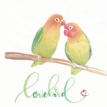 7-lovebird