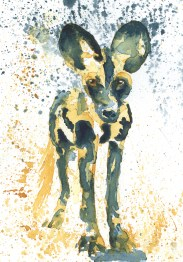 #WorldWatercolorGroup - Watercolor painting by Angela Casey of African Wild Dog - #doodlewash