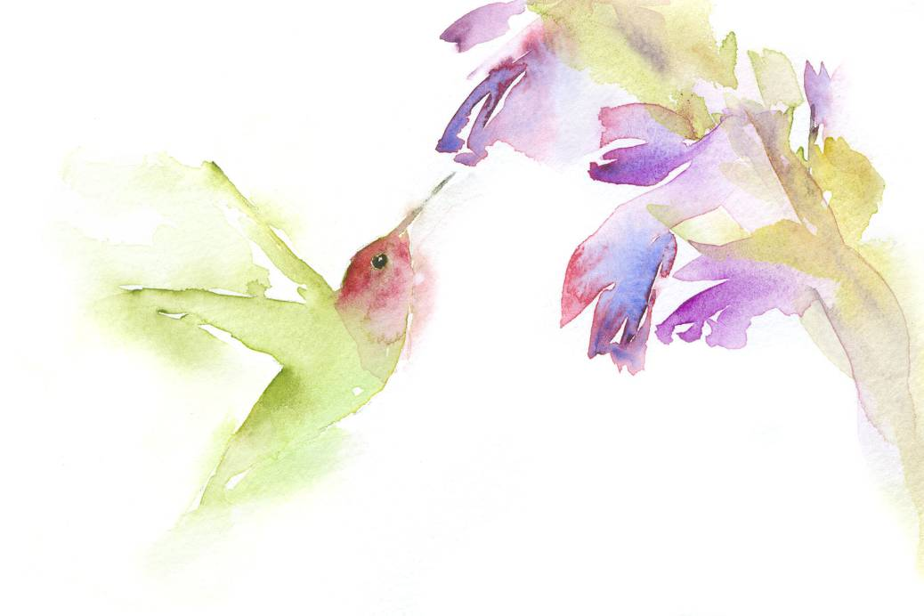 #WorldWatercolorGroup - Watercolor painting by Angela Casey of Hummingbird - #doodlewash