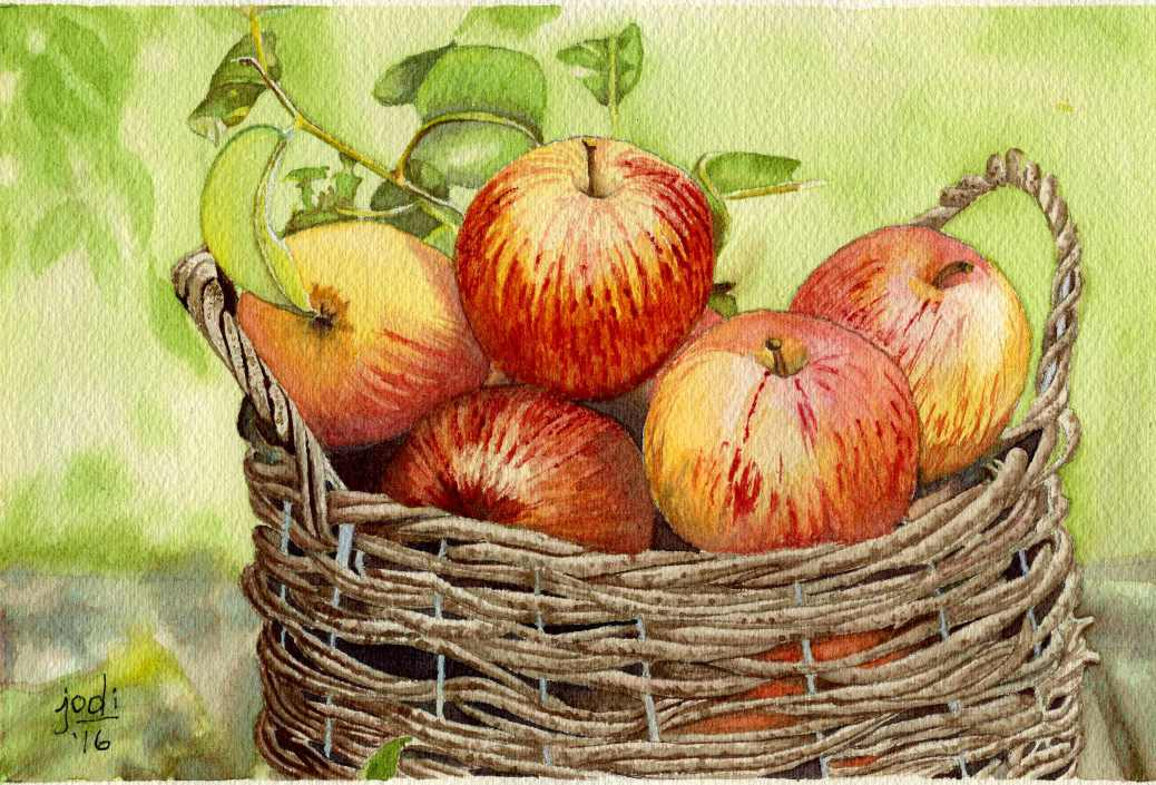 #WorldWatercolorGroup - Watercolor painting by Jodi Sones of basket of apples - #doodlewash