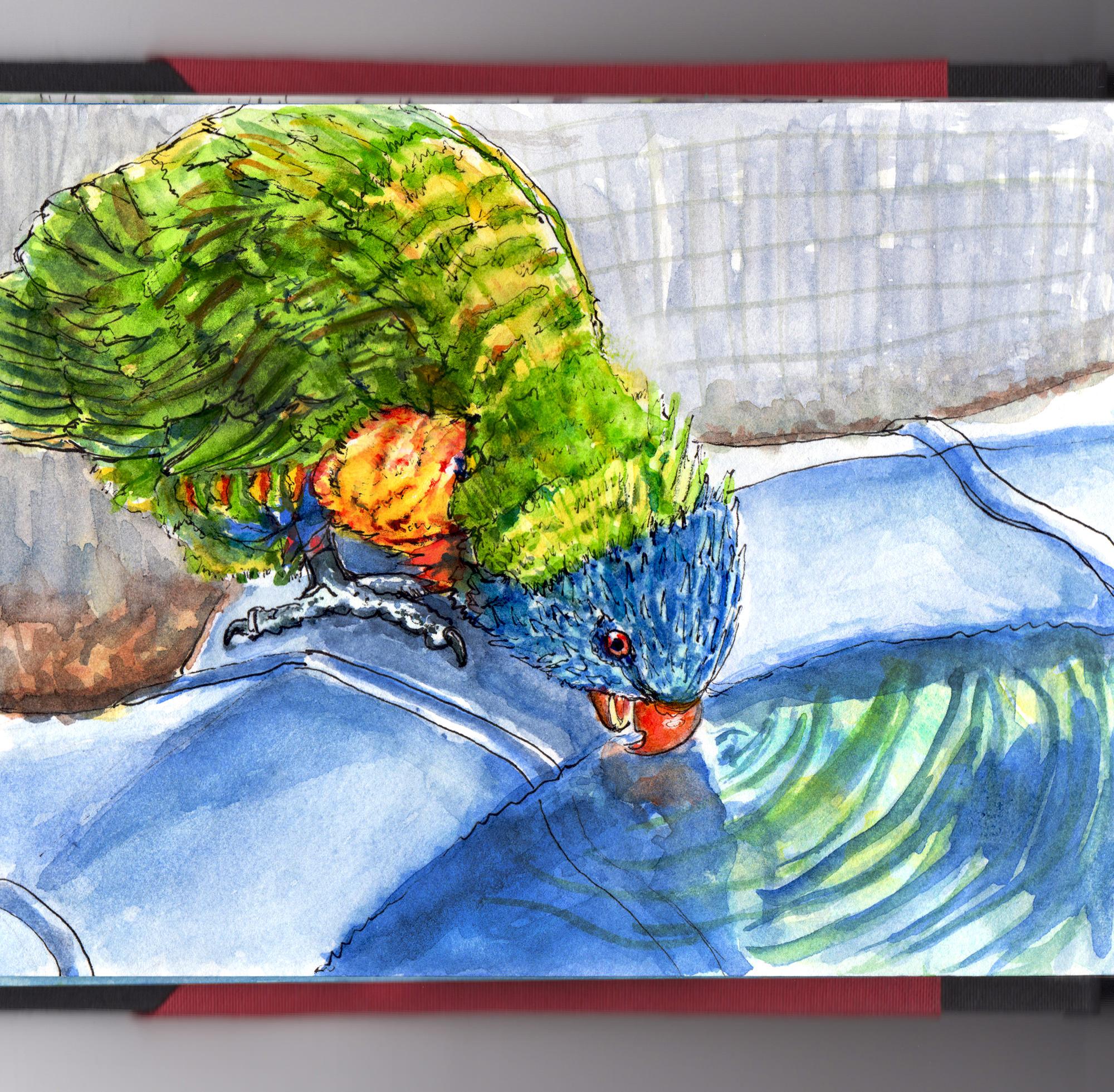 Day 13 - #WorldWatercolorGroup Rainbow Lorikeet Quick Sketch - #doodlewash