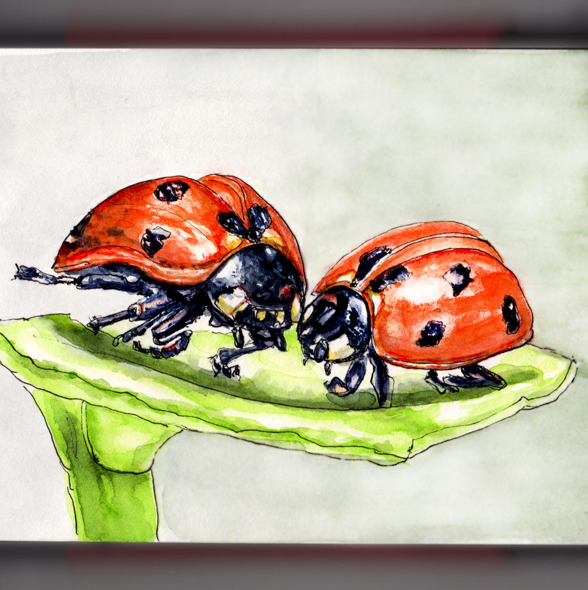 Day 14 - #WorldWatercolorGroup - Love Is All Around Us Two Ladybugs Kissing - #doodlewash