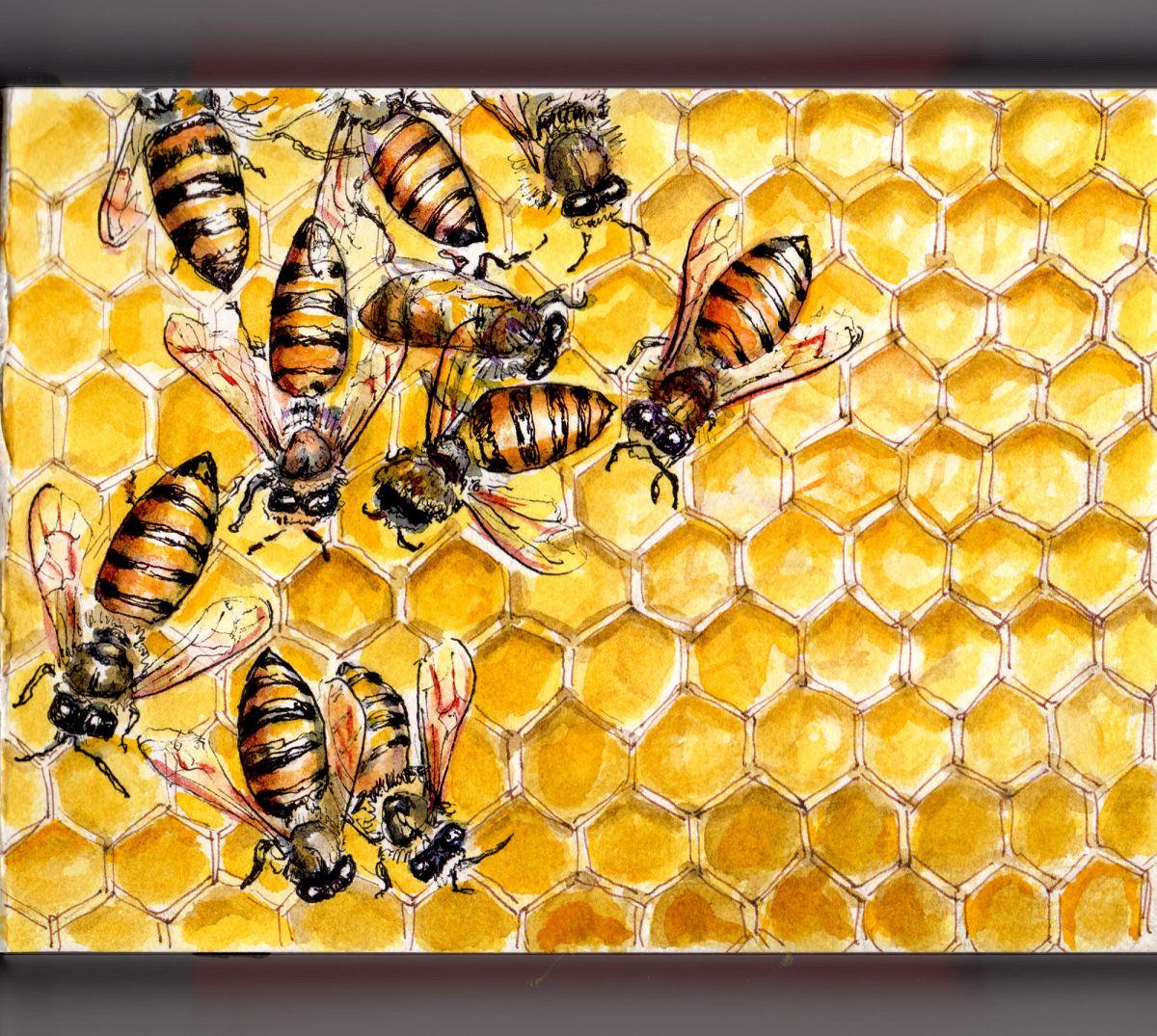 Day 6 - #WorldWatercolorGroup Honey Bees on Honeycomb Doodlewash Extinct Endangered