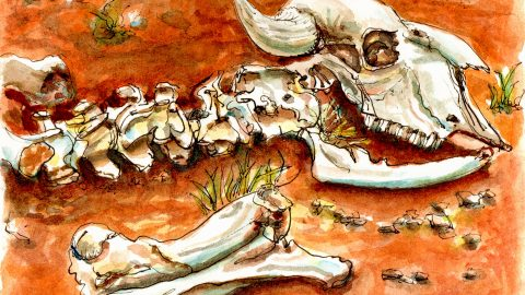 Day 7 - Animal Bones on Red Orange Dirt
