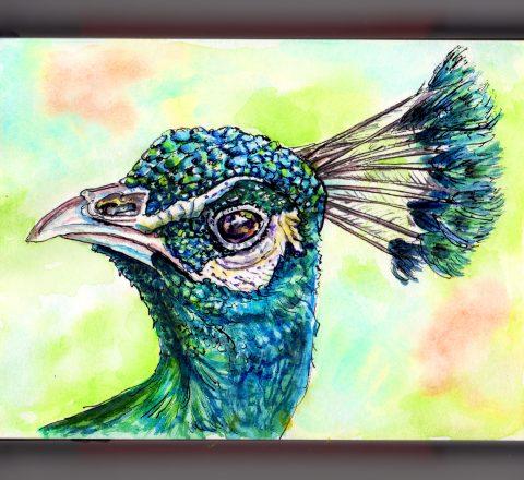 Day 8 - #WorldWatercolorGroup Strut Like A Peacock Head In Profile Watercolor - #doodlewash