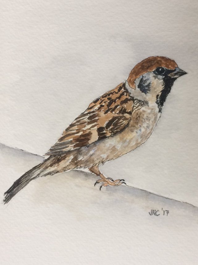 #WorldWatercolorGroup - Watercolor painting of bird by Tamz Canete - #doodlewash