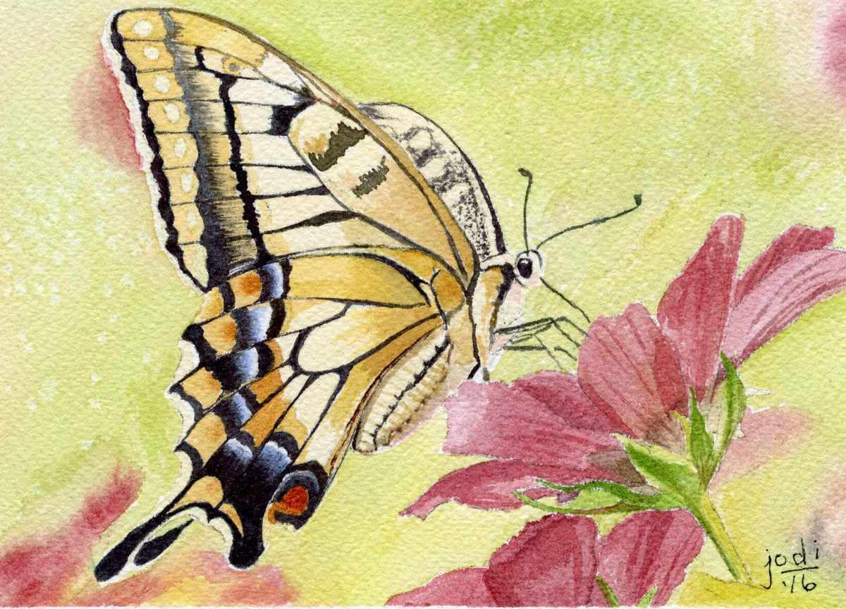 #WorldWatercolorGroup - Watercolor painting by Jodi Sones of butterfly - #doodlewash