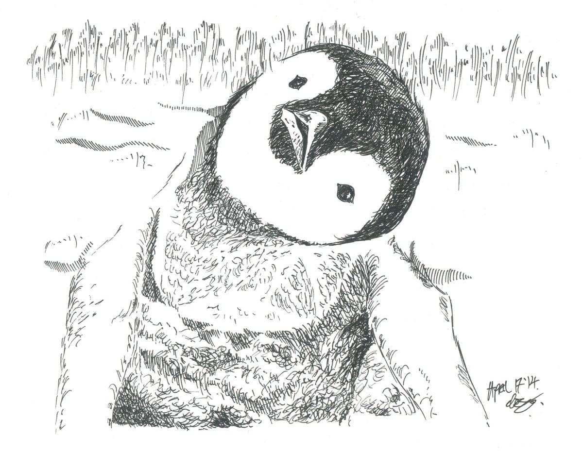 Ink Drawing By Elizabeth Shana - cute penguin - #doodlewash