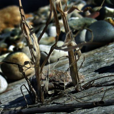 Dry Twigs & Rocks