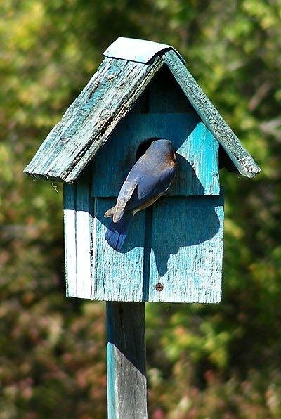 Bluebird Home