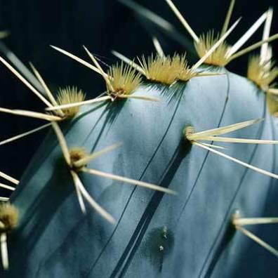 Toothpick Massacre