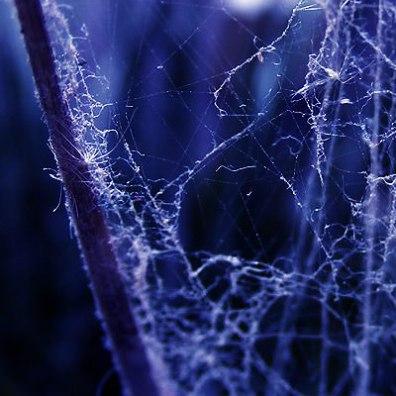 Web Glow