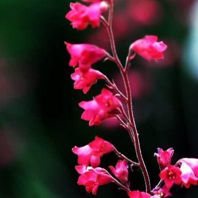 Towering Pink