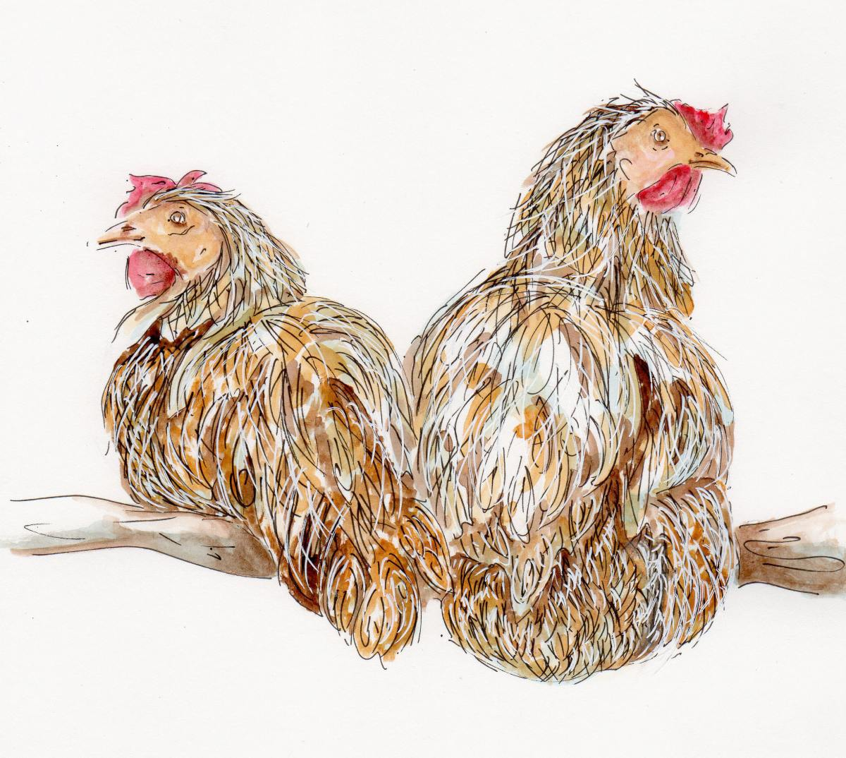 #WorldWatercolorGroup - Watercolor illustration by Patricia Mellett Brown - chickens on branch - #doodlewash
