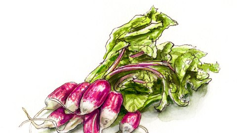 Day 25 - #WorldWatercolorGroup - Radishes In Paris French Food - #doodlewash