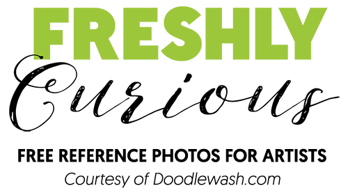 Freshly Curious - Over 700 Free Reference Photos for Artists - Courtesy of Doodlewash.com