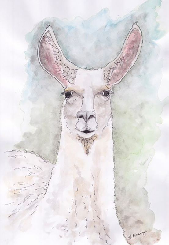 #WorldWatercolorGroup - Watercolor by Heather Musingo of llama - #doodlewash