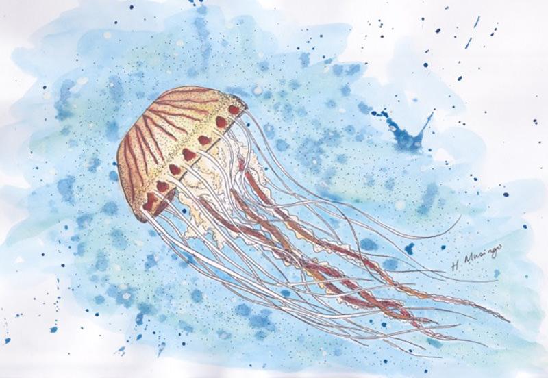 #WorldWatercolorGroup - Watercolor by Heather Musingo of jellyfish - #doodlewash
