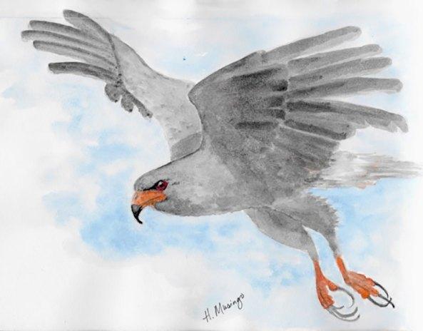 #WorldWatercolorGroup - Watercolor by Heather Musingo of bird - #doodlewash
